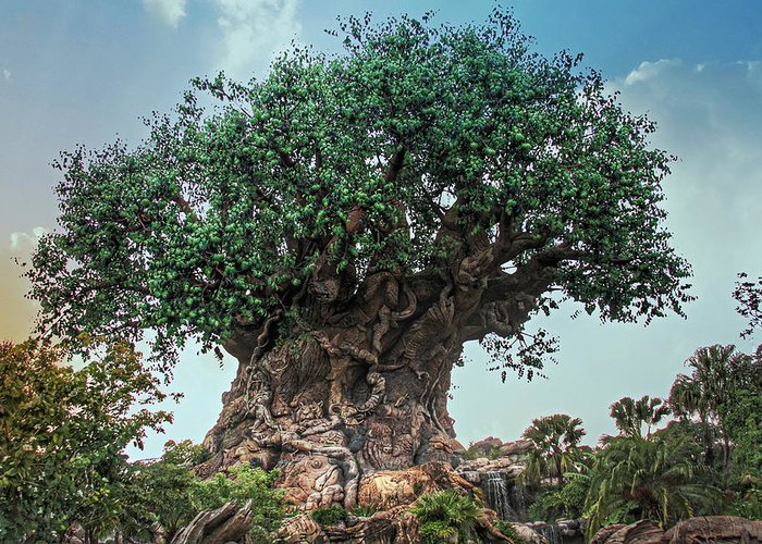 Tree Of Life Greeting Card featuring the photograph Tree Of Life by Jackson Pearson