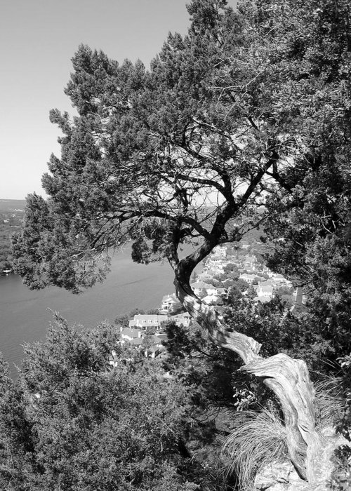 Mount Bonnell Greeting Card featuring the photograph Tree On Mount Bonnell by Lindsey Orlando