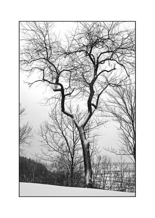 Tree Greeting Card featuring the photograph Tree On The Western Promenade by Filipe N Marques
