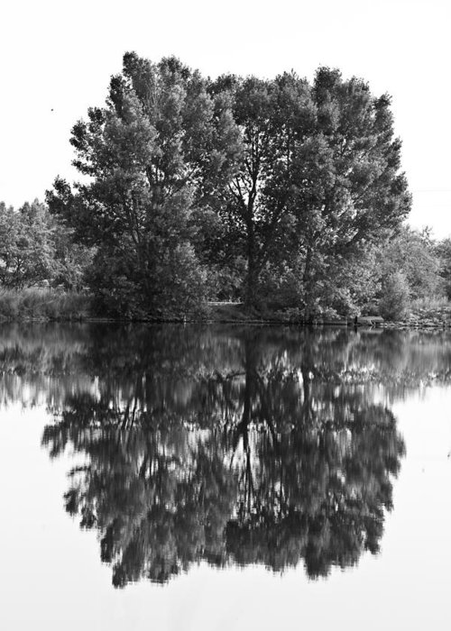 Reflections Greeting Card featuring the photograph Tree Reflection In Black And White by James BO Insogna
