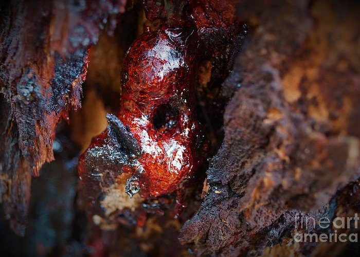 Bloodwood Greeting Card featuring the photograph Tree Sap by Cassandra Buckley
