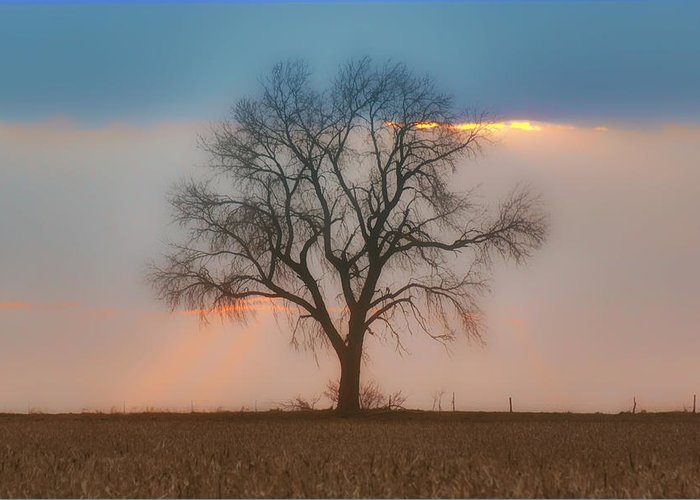 Sky Greeting Card featuring the photograph Tree - Sunset by Nikolyn McDonald