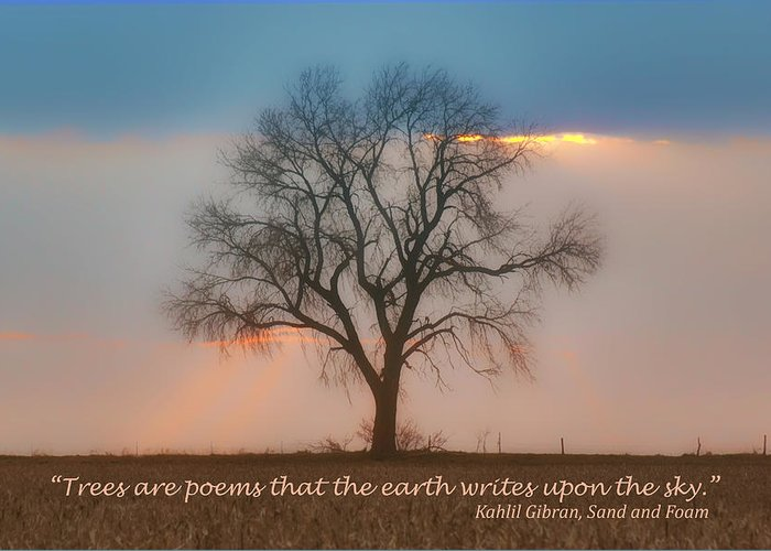 Sky Greeting Card featuring the photograph Tree - Sunset - Quotation by Nikolyn McDonald
