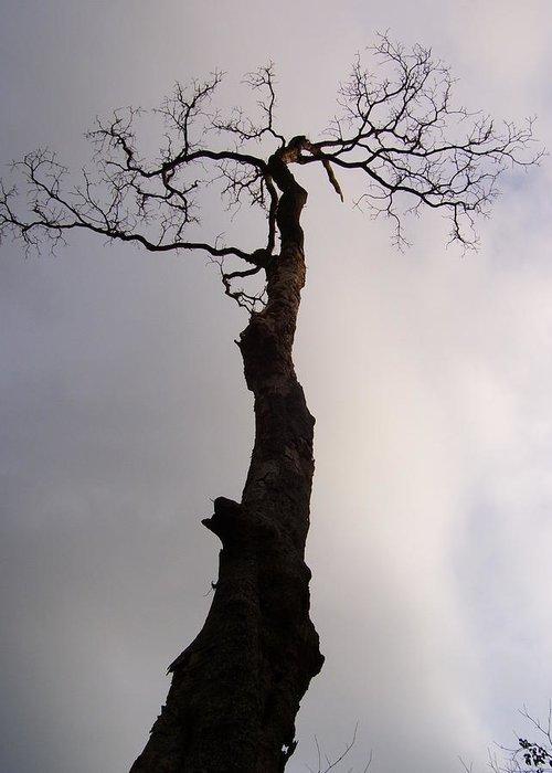 Tree Greeting Card featuring the photograph Tree by Vishal Mutakekar