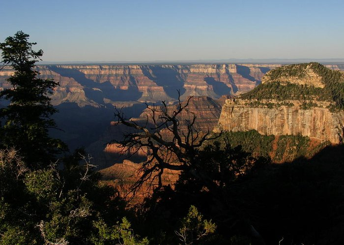 Arizona Greeting Card featuring the photograph Trees And Canyon by Donna Anderson