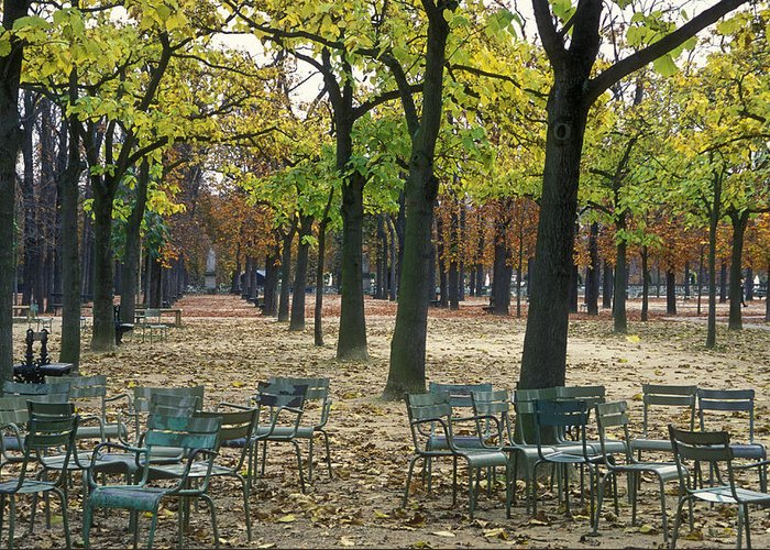 Outdoors Greeting Card featuring the photograph Trees And Empty Chairs In Autumn by Stephen Sharnoff