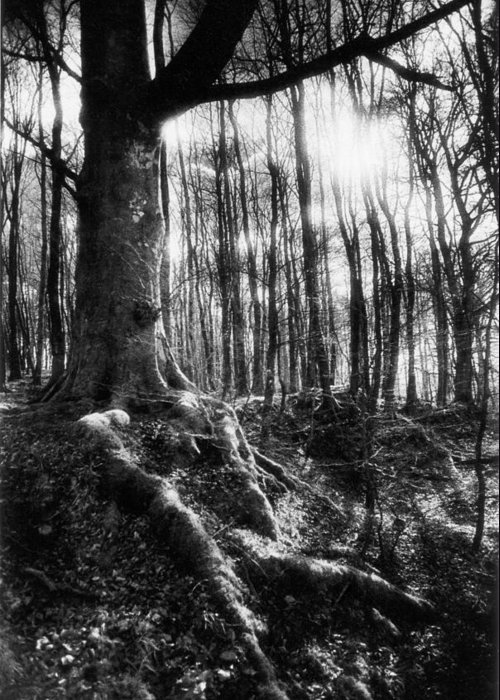 Vale; Legendary; Wood; Woods; Woodland; Landscape; Rural; Countryside; Magical; Mysterious; Fairytale; Bare Trees; Atmospheric; Dramatic; Eerie; Spooky; French; Moonlight; Moonlit Greeting Card featuring the photograph Trees At The Entrance To The Valley Of No Return by Simon Marsden
