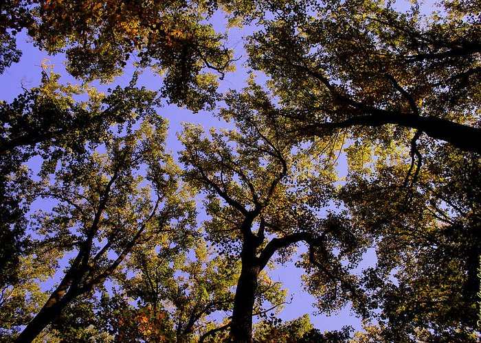Trees Greeting Card featuring the photograph Trees Conversing by Deborah Crew-Johnson
