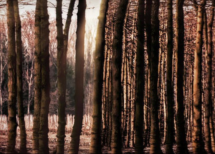 Trees Greeting Card featuring the photograph Trees Gathering by Wim Lanclus