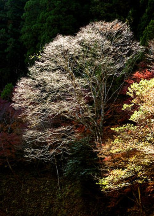 Trees Greeting Card featuring the photograph Trees In Japan 11 by George Cabig