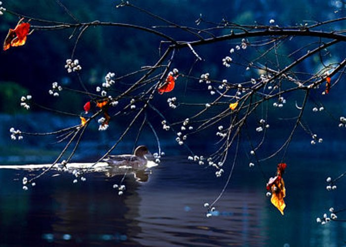 Water Greeting Card featuring the photograph Trees In Japan 5 by George Cabig