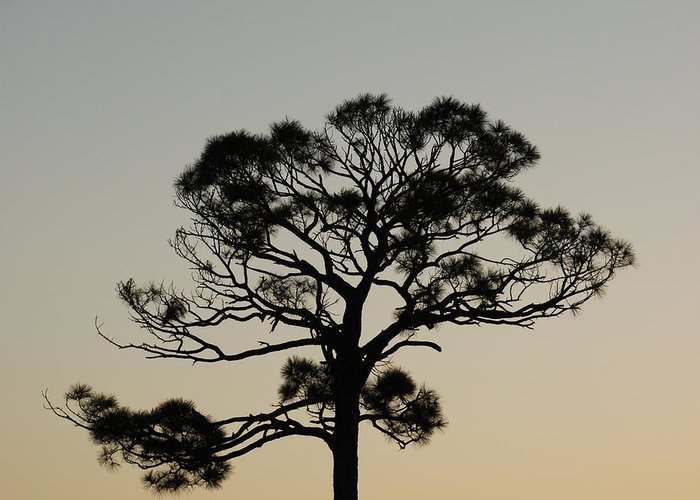 Tree Greeting Card featuring the photograph Trees In Sunset by Rob Hans