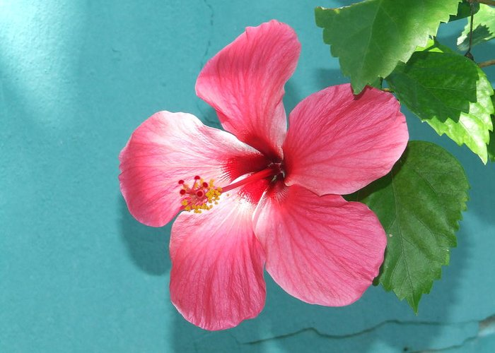 Flower Greeting Card featuring the photograph Tropical Bloom by Vanda Sucheston Hughes
