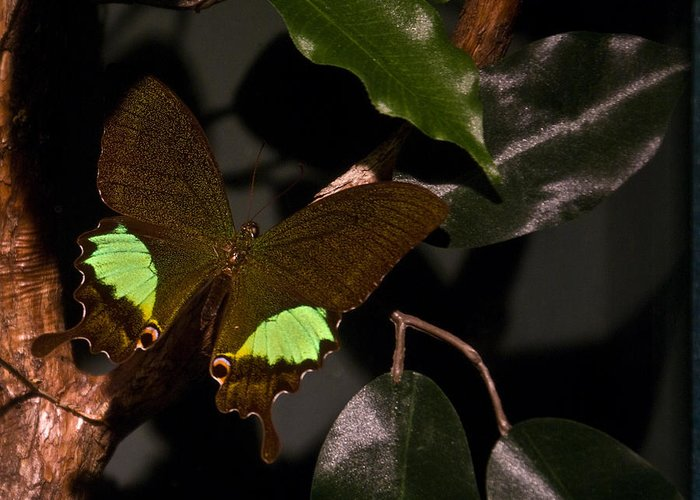 Tropical Greeting Card featuring the photograph Tropical Buterfly by Douglas Barnett