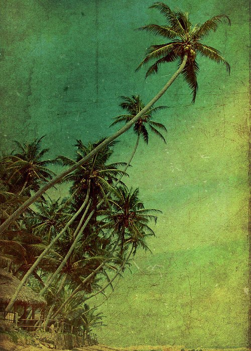 Palm Greeting Card featuring the photograph Tropical Vestige by Andrew Paranavitana