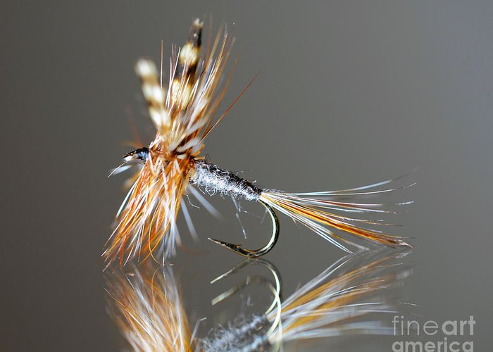 Fly Greeting Card featuring the photograph Trout Fly 2 by Glenn Gordon