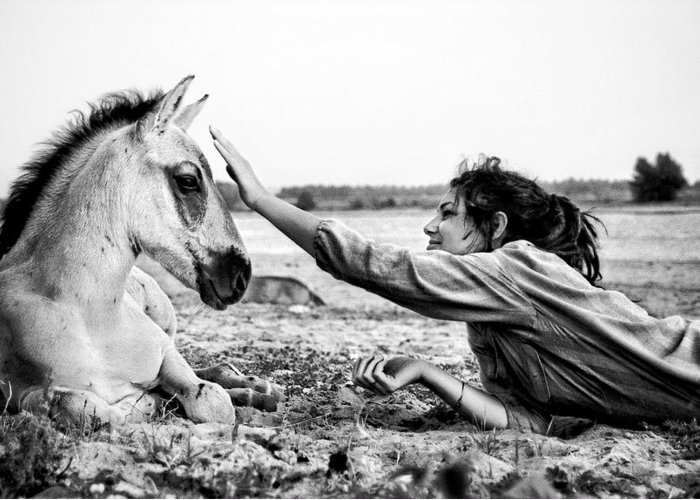 Horse Greeting Card featuring the photograph Trustful Friendship by Justyna Lorenc