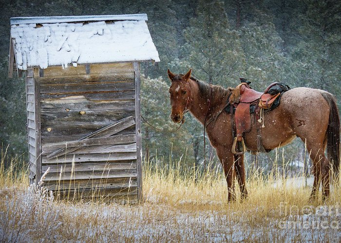 America Greeting Card featuring the photograph Trusty Horse by Inge Johnsson