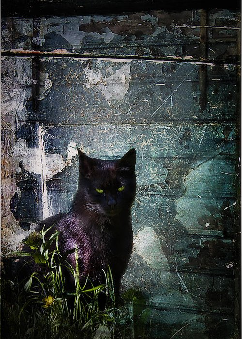 Dark Greeting Card featuring the photograph Truth Or Stare... by Evelina Kremsdorf