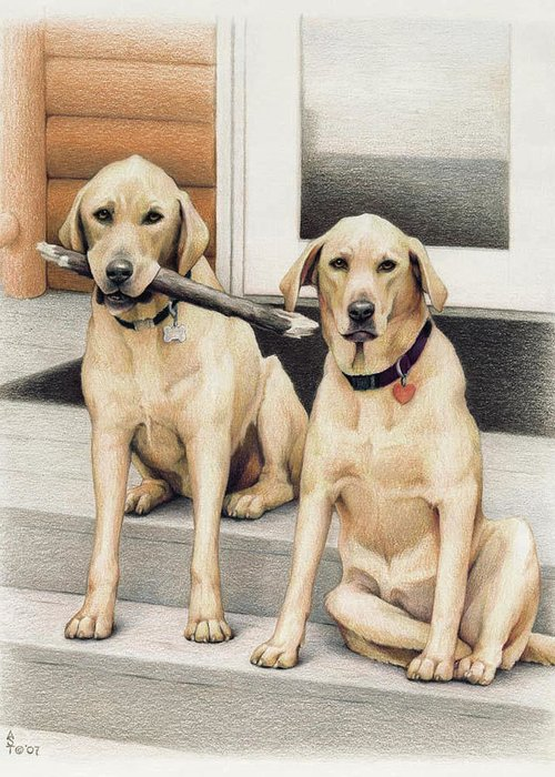 Dogs Greeting Card featuring the drawing Tucker And Lily by Amy S Turner