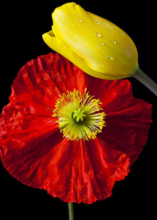 Yellow Greeting Card featuring the photograph Tulip And Iceland Poppy by Garry Gay