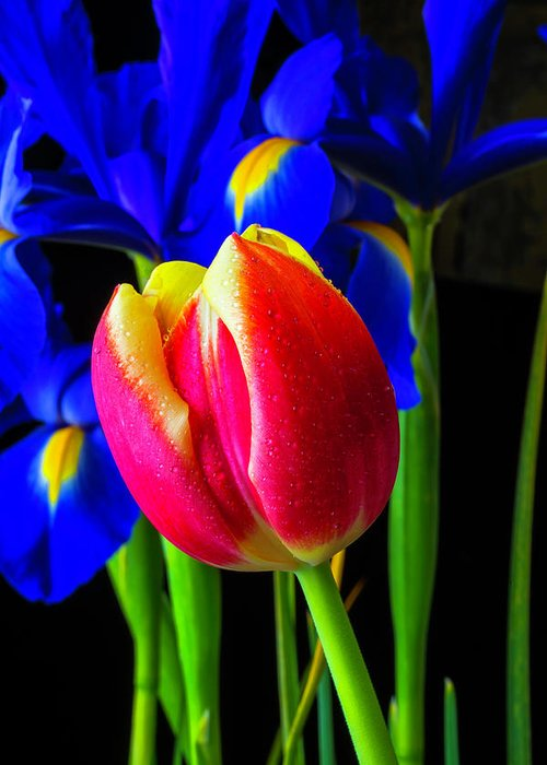 Tulip Greeting Card featuring the photograph Tulip And Iris by Garry Gay