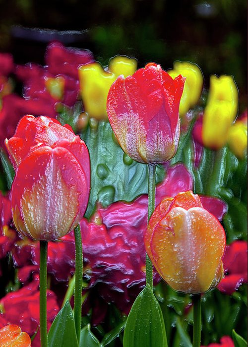 Tulips Greeting Card featuring the digital art Tulip Candy by Don Wright