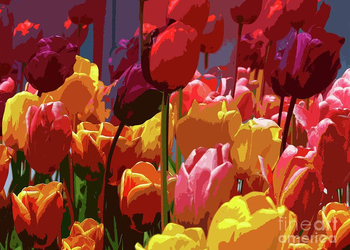 Tulips Greeting Card featuring the photograph Tulip Confusion by Sharon Talson