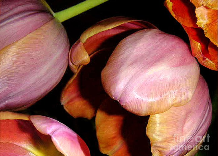 Nature Greeting Card featuring the photograph Tulips In The Shadows by Lucyna A M Green