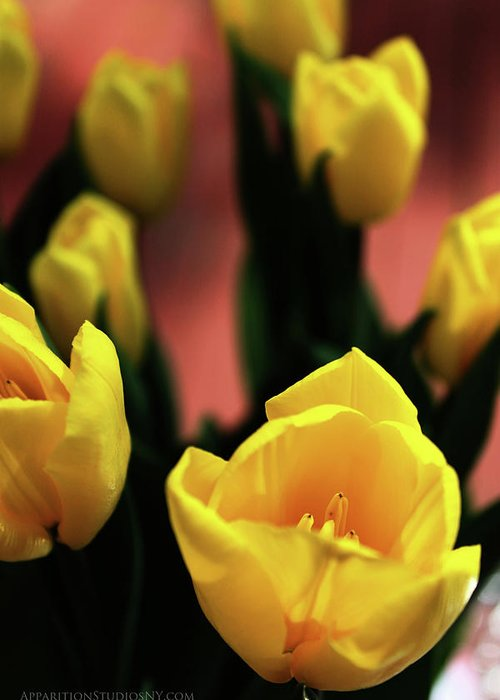 Tulips Greeting Card featuring the photograph Tulips by Matt Truiano