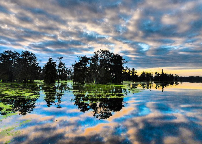 Orcinus Fotograffy Greeting Card featuring the photograph Tumultuous Swamp by Kimo Fernandez