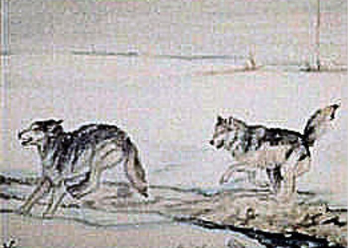 Wolves Greeting Card featuring the painting Tundra Frolic by Debra Sandstrom