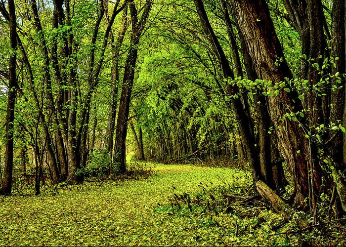 Trees Greeting Card featuring the photograph Tunnel Of Love by Lowlight Images