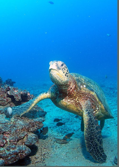 Greeting Card featuring the photograph Turtle Portrait by Todd Hummel