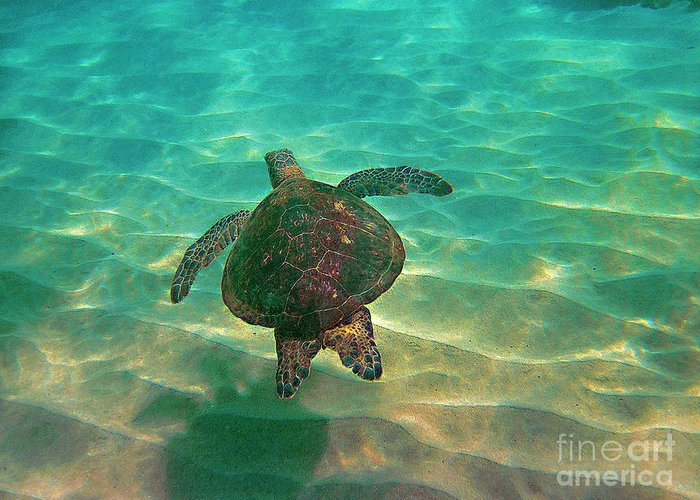 Honu Greeting Card featuring the photograph Turtle Sailing Over Sand by Bette Phelan