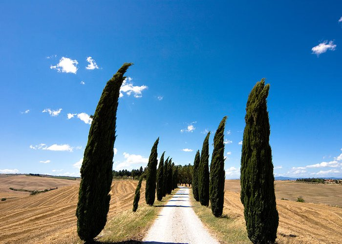 Tuscany Greeting Card featuring the photograph Tuscan Cypress Landscape by Mathew Lodge