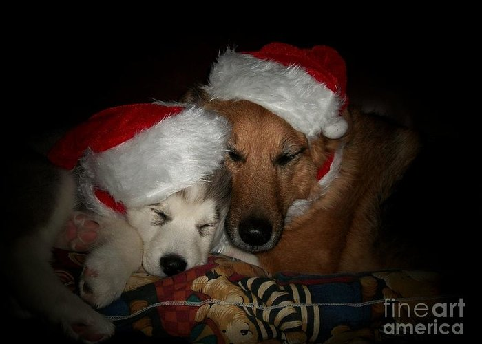 Dog Greeting Card featuring the photograph Twas The Night Before Christmas by Marjorie Imbeau