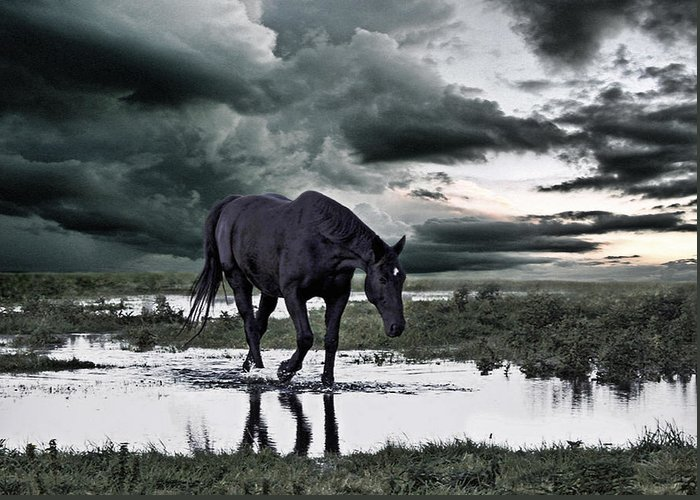 Horse Greeting Card featuring the photograph Twilight Of The Gods by Joachim G Pinkawa