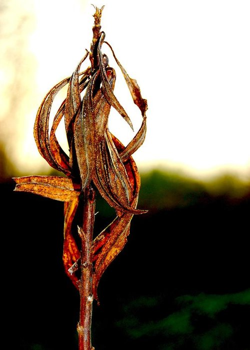 Nature Greeting Card featuring the photograph Twist Plant by Lauren Macko