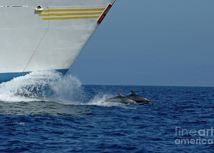 Andalusia Greeting Card featuring the photograph Two Bottlenose Dolphins Swimming In Front Of A Ship by Sami Sarkis