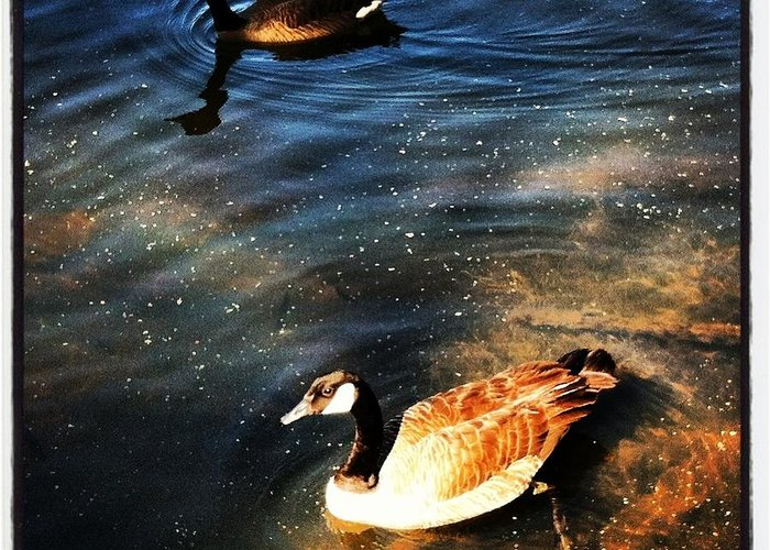 Ducks Greeting Card featuring the photograph Two Ducks by Artie Rawls