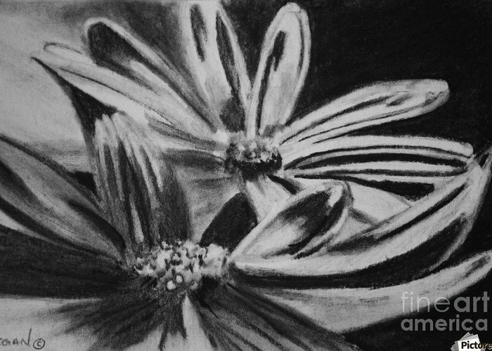 Flowers Greeting Card featuring the drawing Two Flowers by Regan J Smith