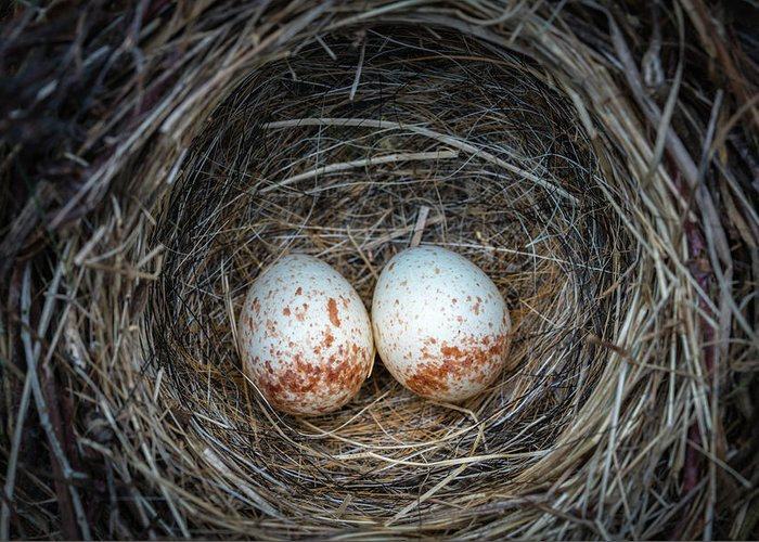 Animal Greeting Card featuring the photograph Two Junco Eggs In The Nest by William Freebilly photography