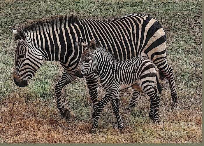 Zebra Greeting Card featuring the photograph Two Of A Kind by David Carter