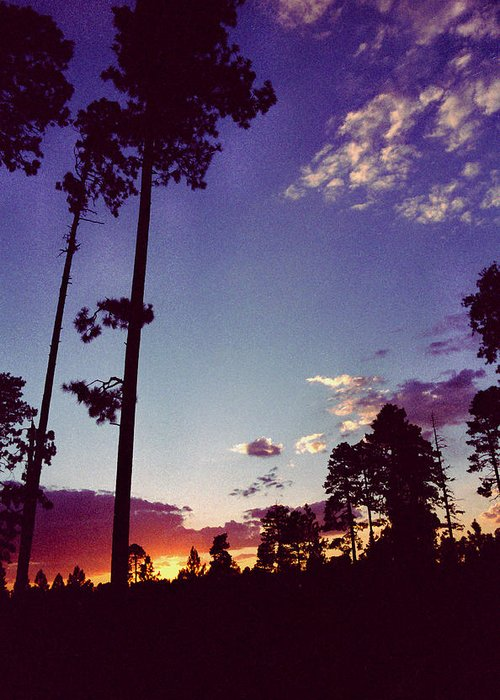 Arizona Sunset Greeting Card featuring the photograph Two Pines Sunset by Randy Oberg