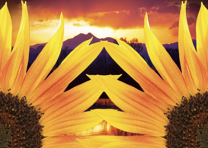 Sunflowers Greeting Card featuring the photograph Two Sunflower Sunset by James BO Insogna