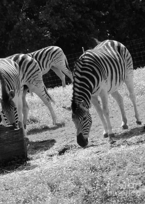Zebras Greeting Card featuring the photograph Two Zebras by Kathleen Struckle