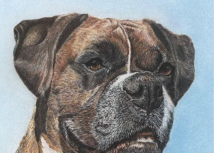 Dog Greeting Card featuring the drawing Tyson in Color by Marlene Piccolin