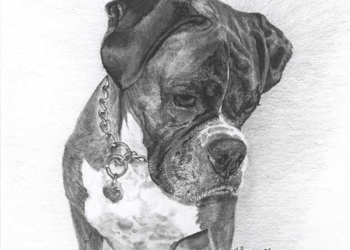 My Boxer Greeting Card featuring the drawing Tyson by Marlene Piccolin