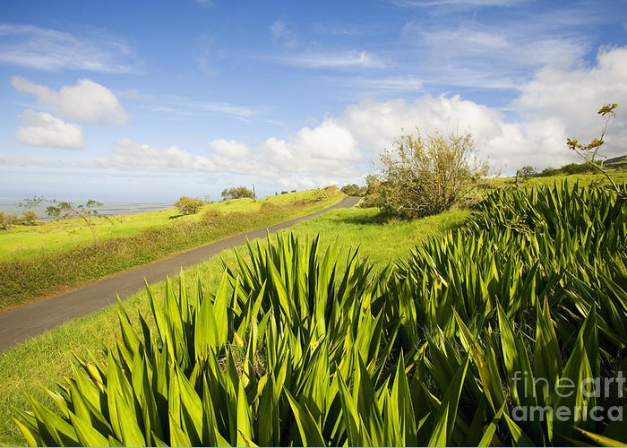 Afternoon Greeting Card featuring the photograph Ulupalakua Country Road by Ron Dahlquist - Printscapes